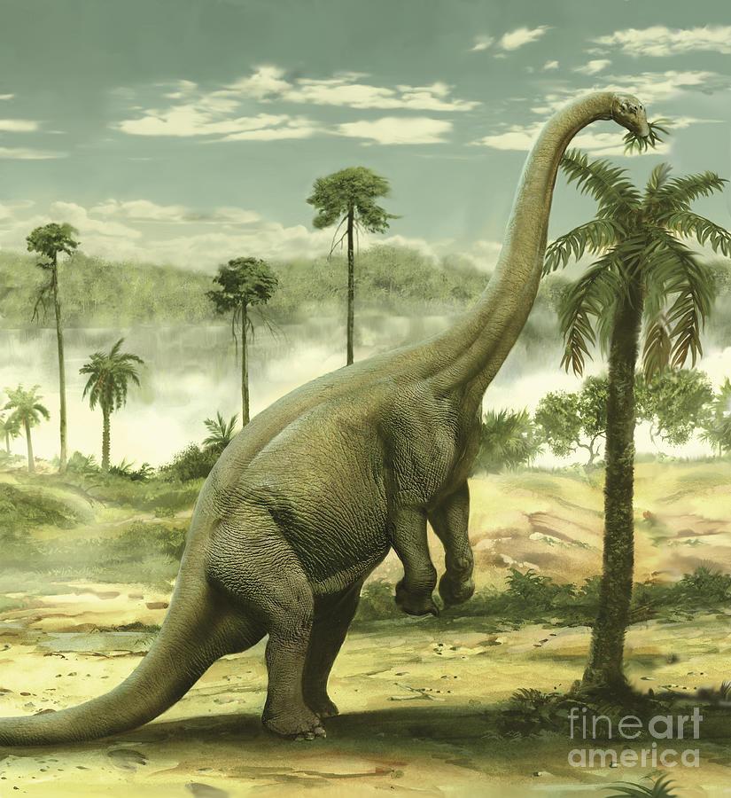 Apatosaurus Feeding On The Leaves Digital Art By Jan Sovak
