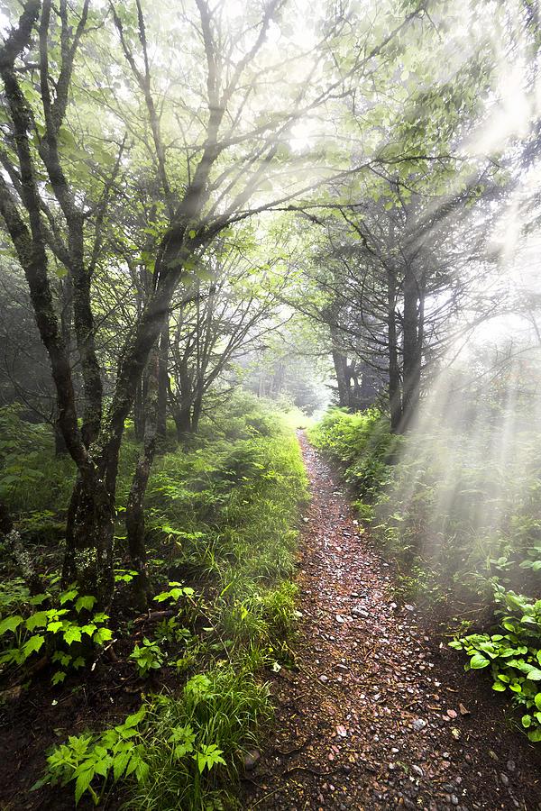 American Photograph - Appalachian Trail by Debra and Dave Vanderlaan
