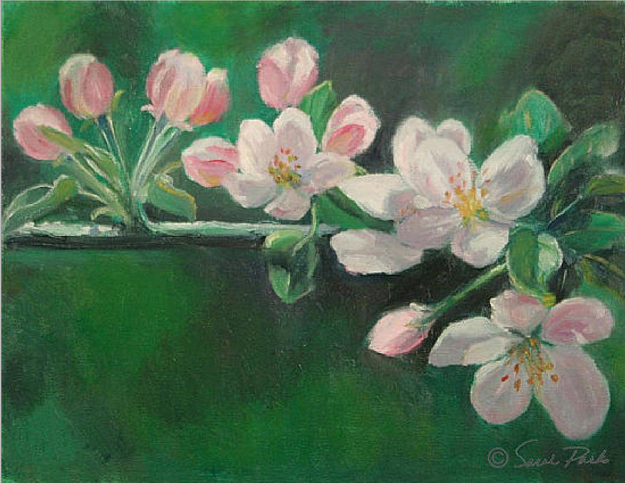 Apple Blossoms In Spring Painting  - Apple Blossoms In Spring Fine Art Print