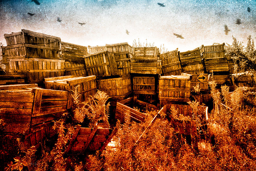 Apple Crates And Crows Photograph