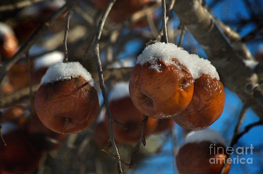 Apple Sorbet Photograph