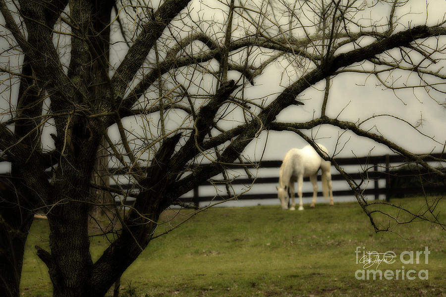 April Showers Photograph  - April Showers Fine Art Print