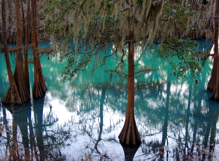 South Photograph - Aqua Beauty by Kim Pate