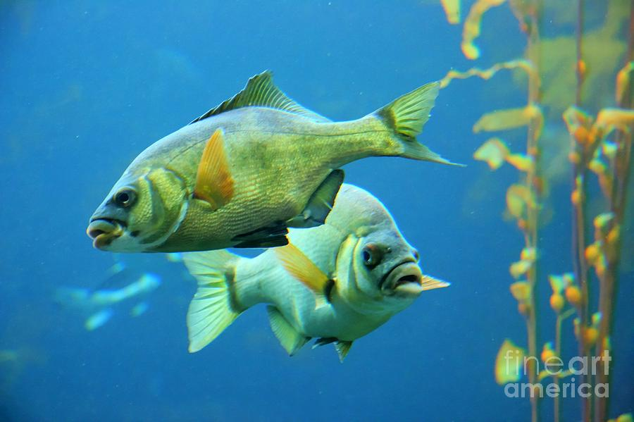 Aquarium Photograph - Aquarium by Tap  On Photo