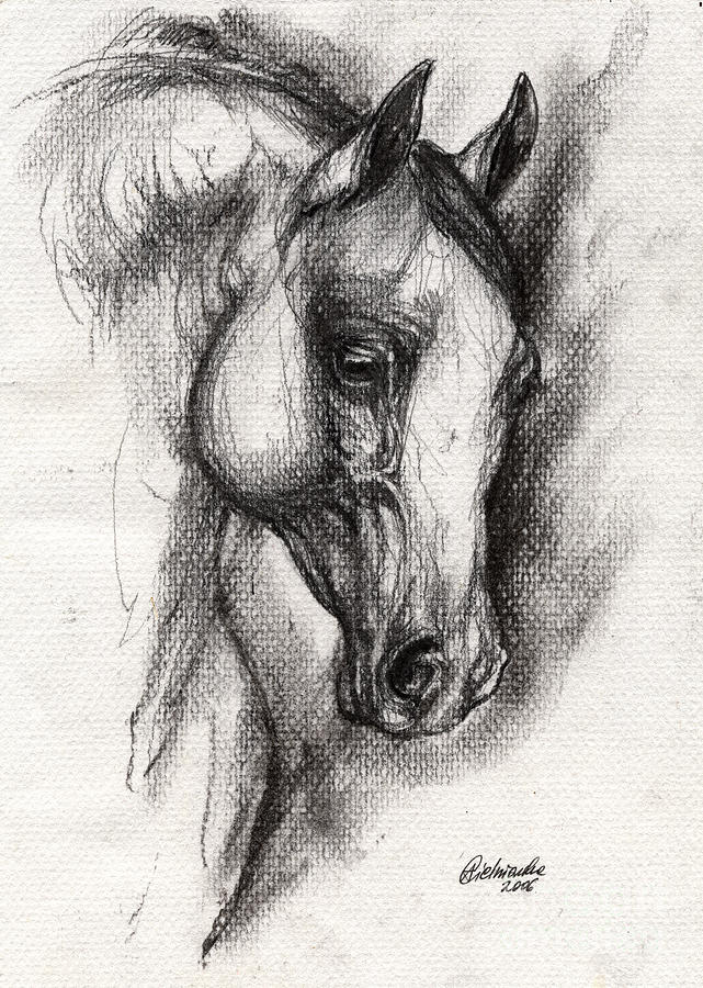 Arabian Horse Drawing 12 Drawing