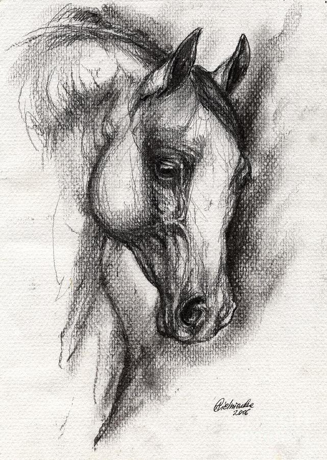 Drawings Of Arabian Horse Heads