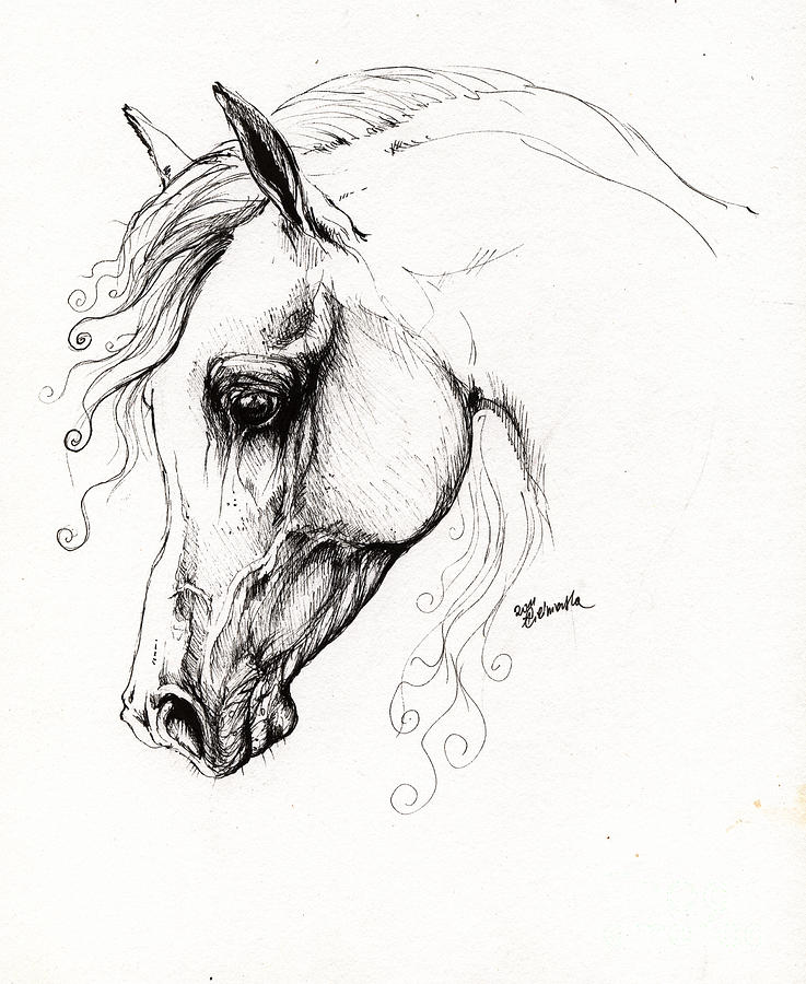 Arabian Horse Drawing 15 Drawing