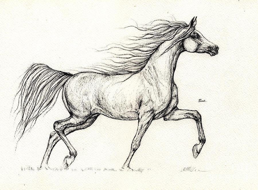 how to draw an arabian horse head
