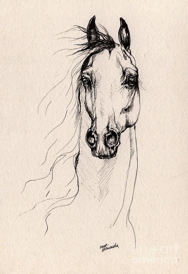 Arabian Horse Drawing 25 Drawing
