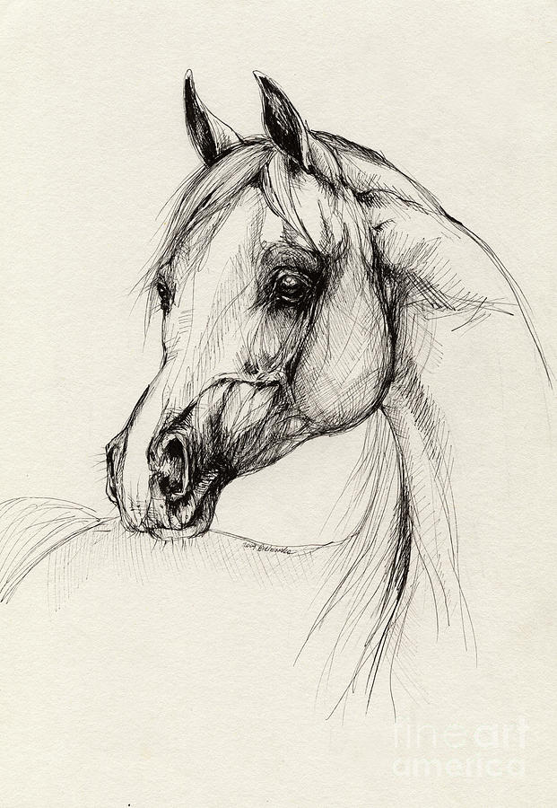 Arabian Horse Drawing 27 Drawing