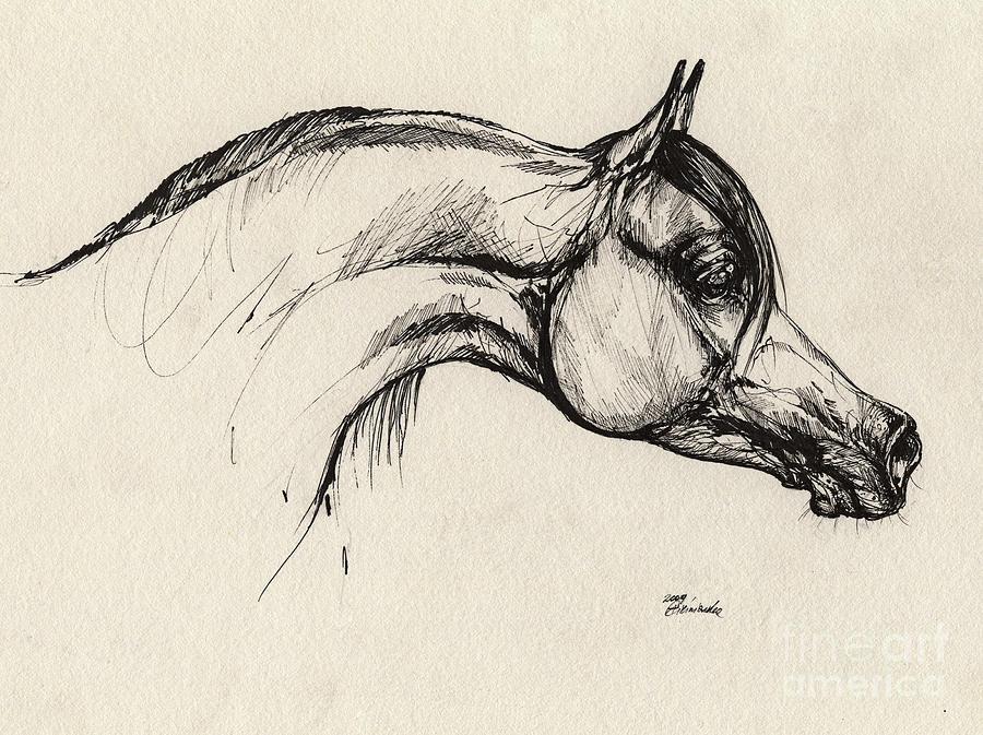 Arabian Horse Drawing 30 Drawing by Angel Tarantella