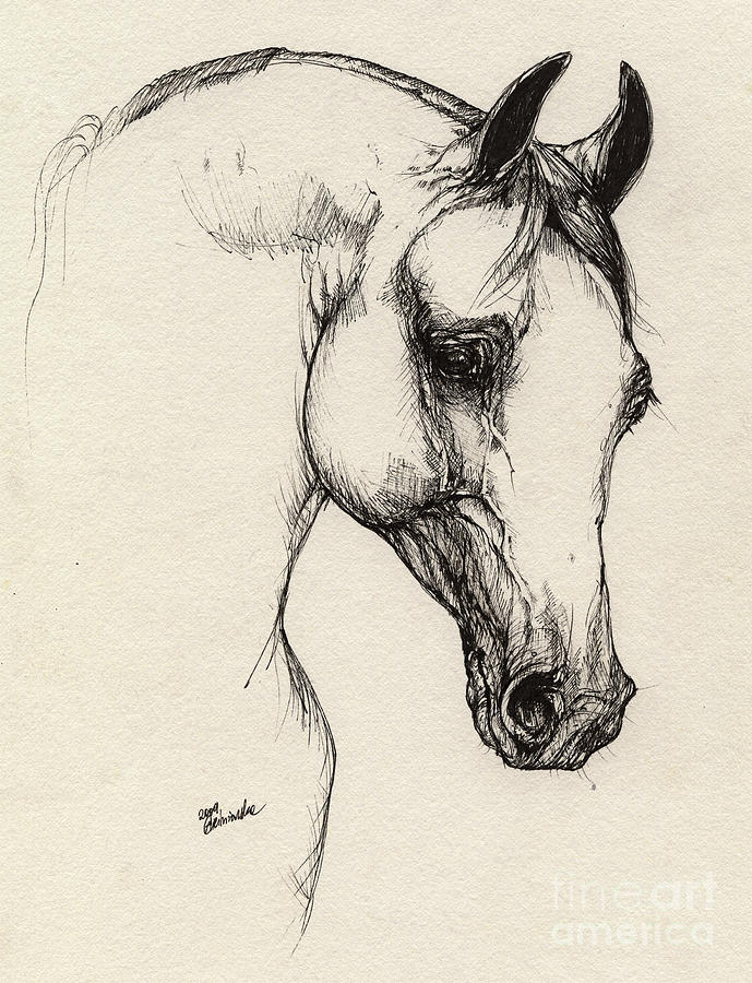 Arabian Horse Drawing 32 Drawing  - Arabian Horse Drawing 32 Fine Art Print