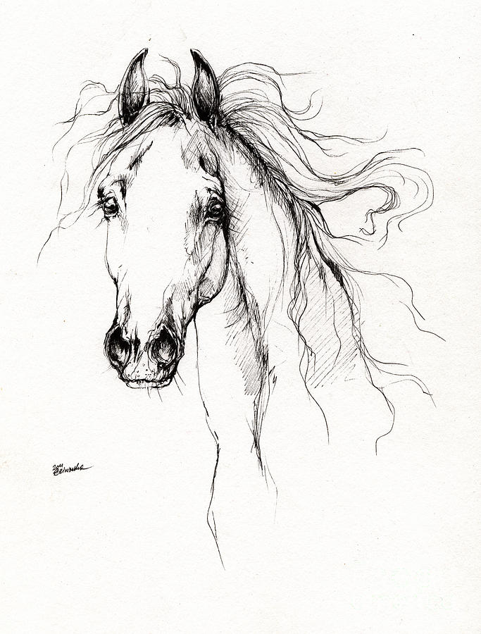 Arabian Horse Drawing 4 Drawing  - Arabian Horse Drawing 4 Fine Art Print