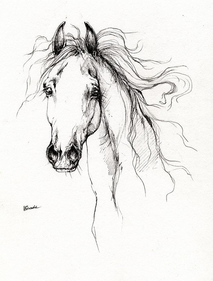 Arabian Horse Drawing 4 Drawing