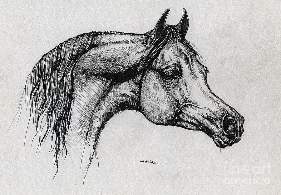 Arabian Horse Drawing 40 Drawing  - Arabian Horse Drawing 40 Fine Art Print