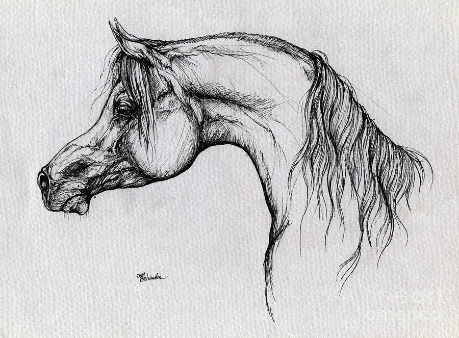 Arabian Horse Drawing 62 Drawing by Angel Tarantella