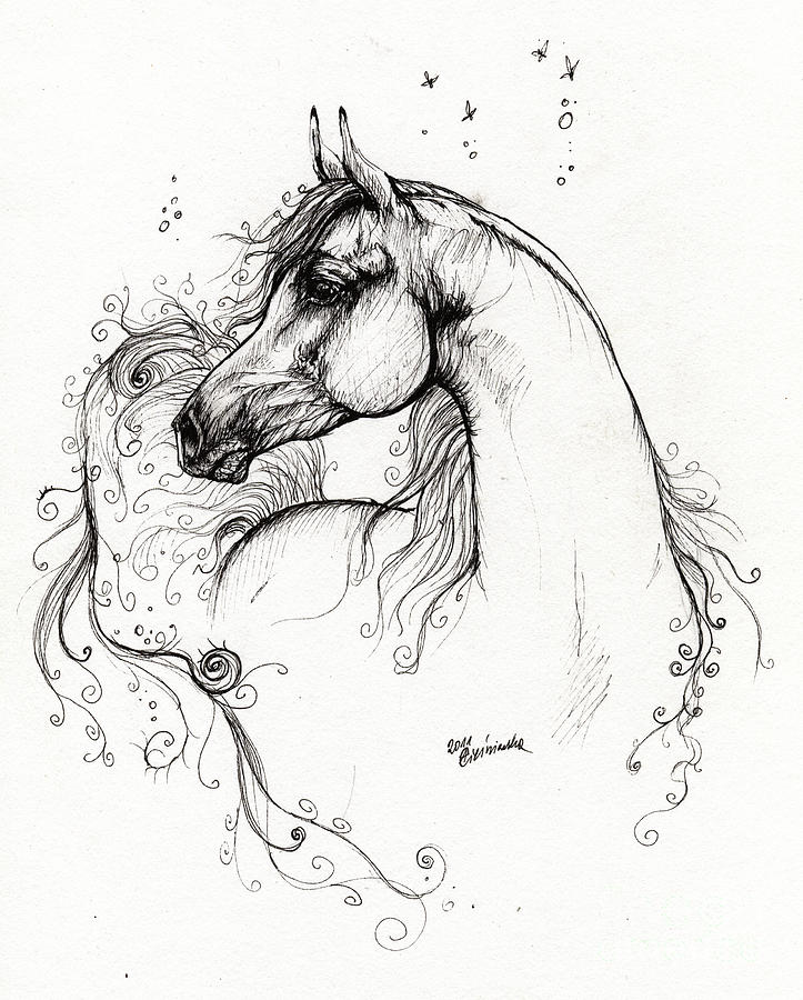 Arabian Horse Drawing 8 Drawing  - Arabian Horse Drawing 8 Fine Art Print