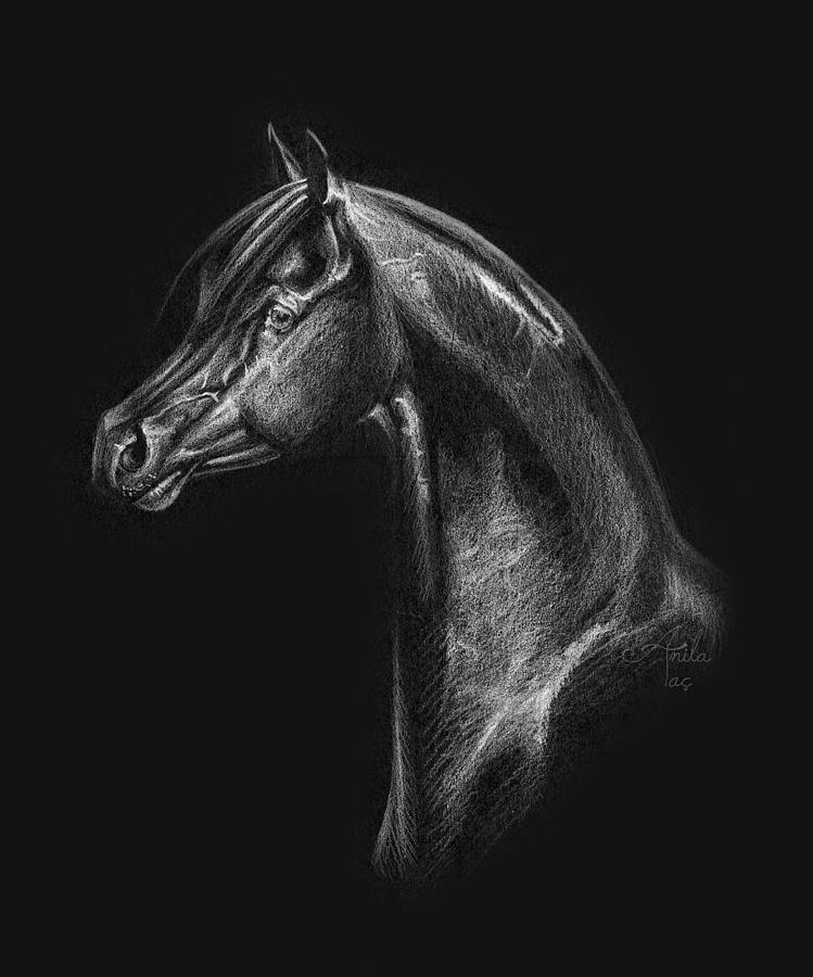 Arabian Horse Head Drawing Drawing by Anila Tac