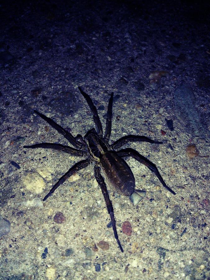 Arachne Photograph