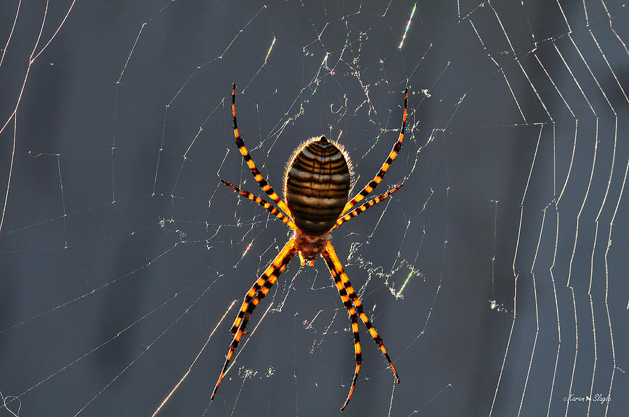 Arachnophobia Photograph