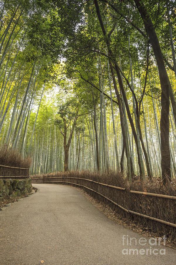 Arashiyama Photograph - Arashiyama Kyoto Japan by Colin and Linda McKie