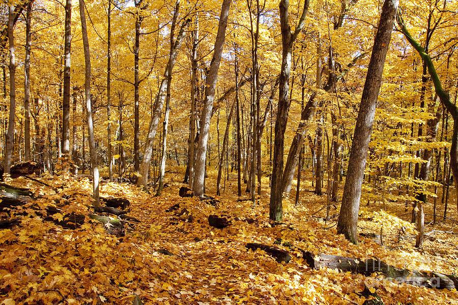 Arboretum Trail Photograph