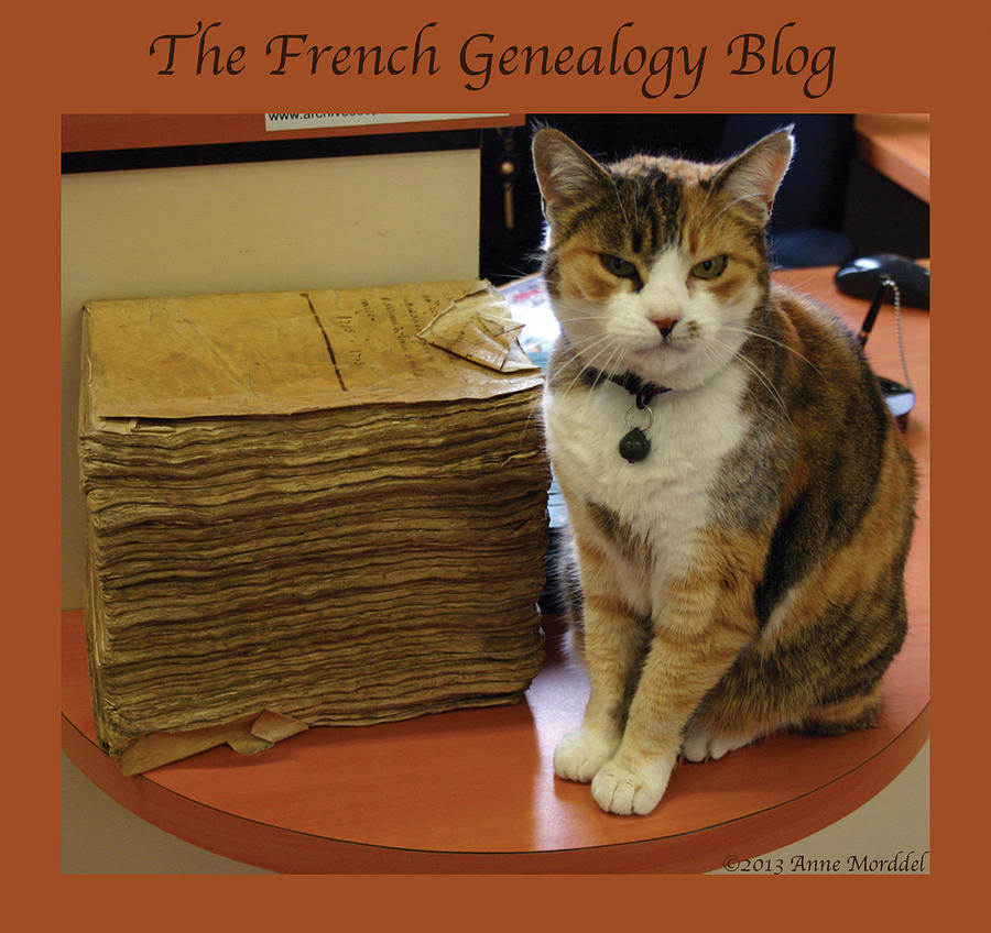 Archives Cat With Fgb Border Photograph  - Archives Cat With Fgb Border Fine Art Print