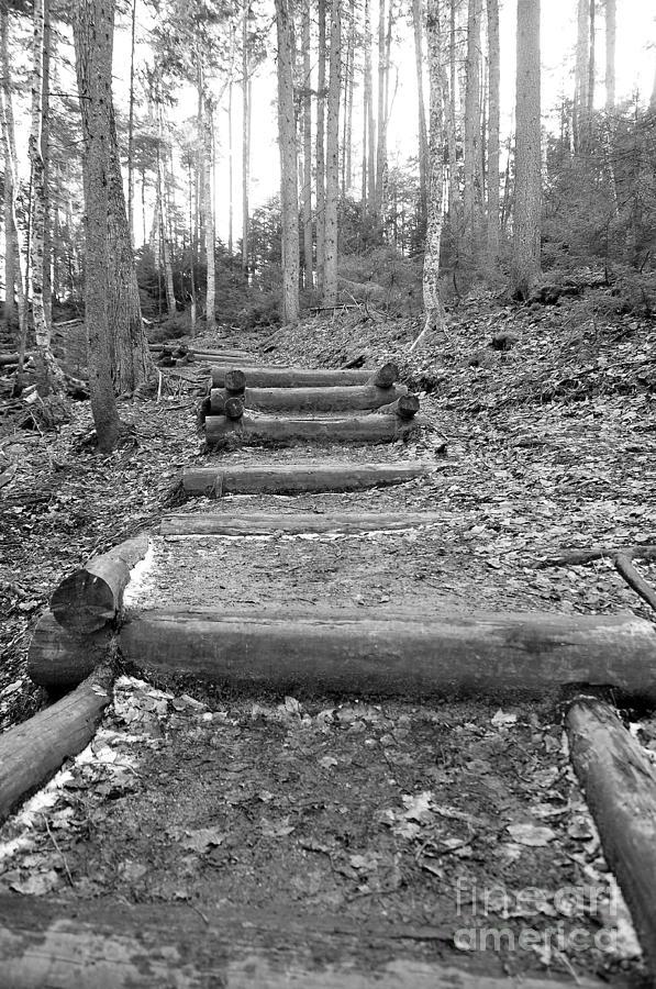 Arethusa Falls Mountain Trail Photograph