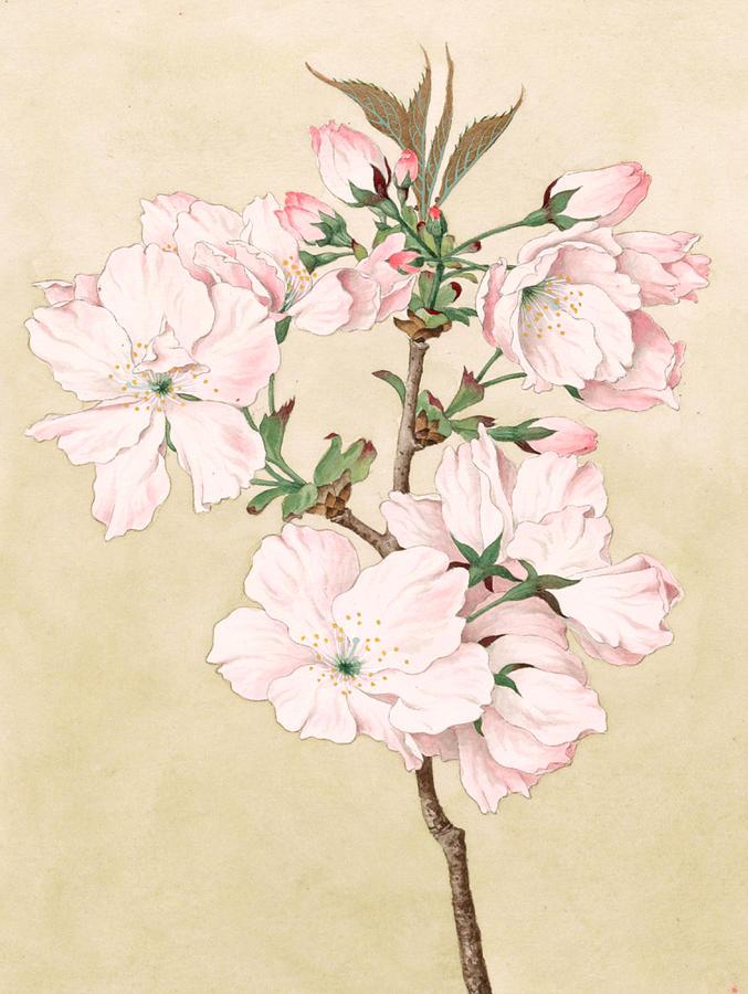 Ariake Daybreak Vintage Japanese Watercolor Painting