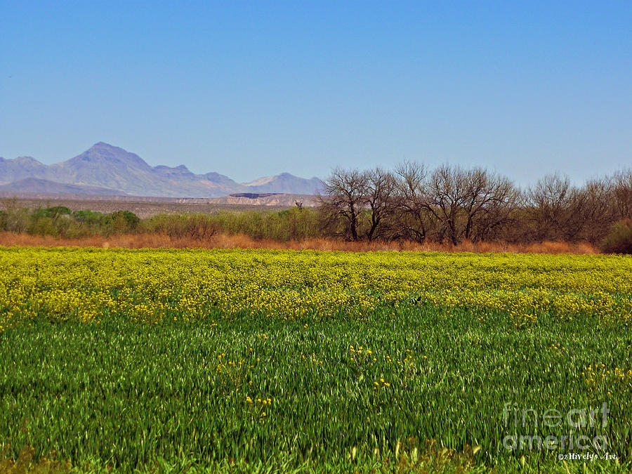Arizona Spring Photograph