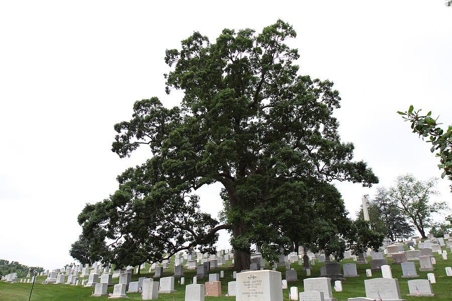 Arlington Photograph - Arlington National Cemetery - 01134 by DC Photographer