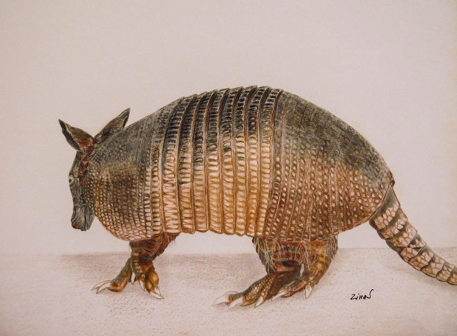 Armadillo Drawing  - Armadillo Fine Art Print