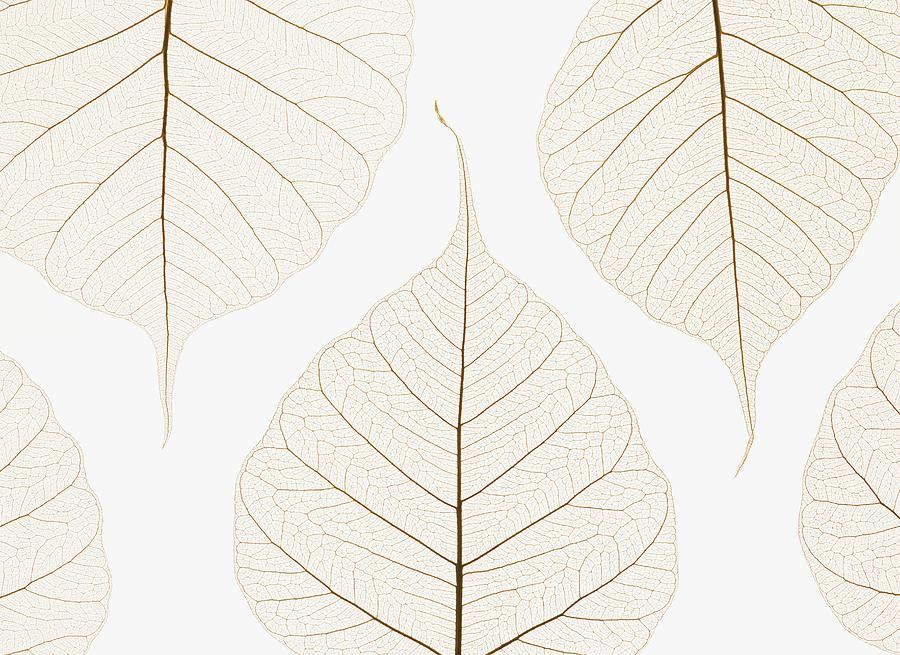 Arranged Leaves Photograph