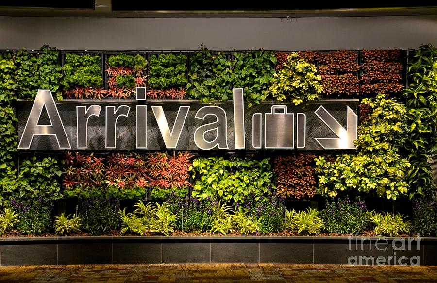 Arrival Photograph - Arrival Sign Arrow And Flowers At Singapore Changi Airport by Imran Ahmed