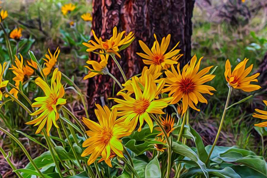 Arrowleaf Balsamroot Painting  - Arrowleaf Balsamroot Fine Art Print