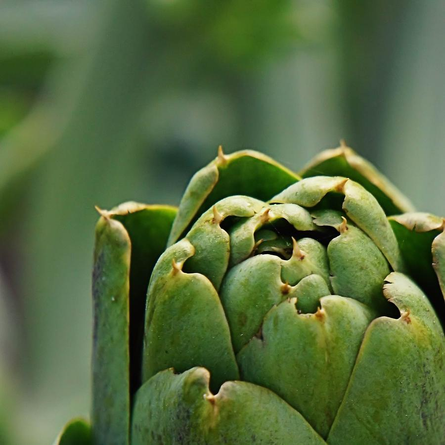Artichoke Top Photograph  - Artichoke Top Fine Art Print