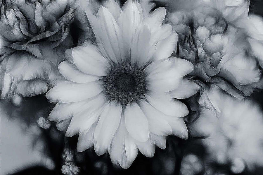 Artistic Black And White Flowers Photograph