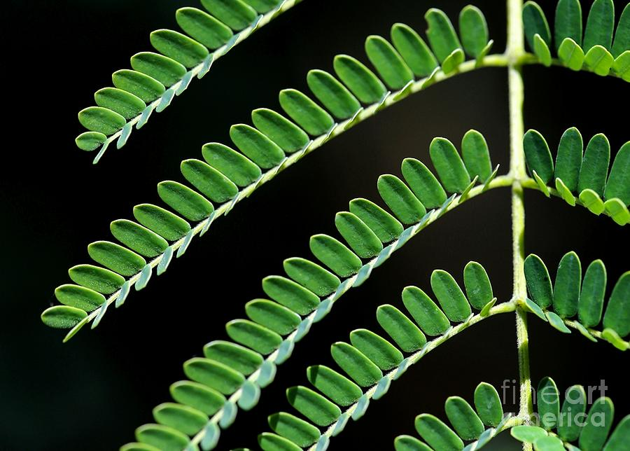 Green Photograph - Artsy Green by Sabrina L Ryan