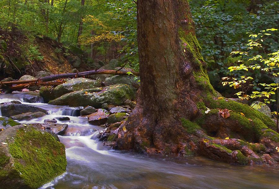 As The River Runs Photograph