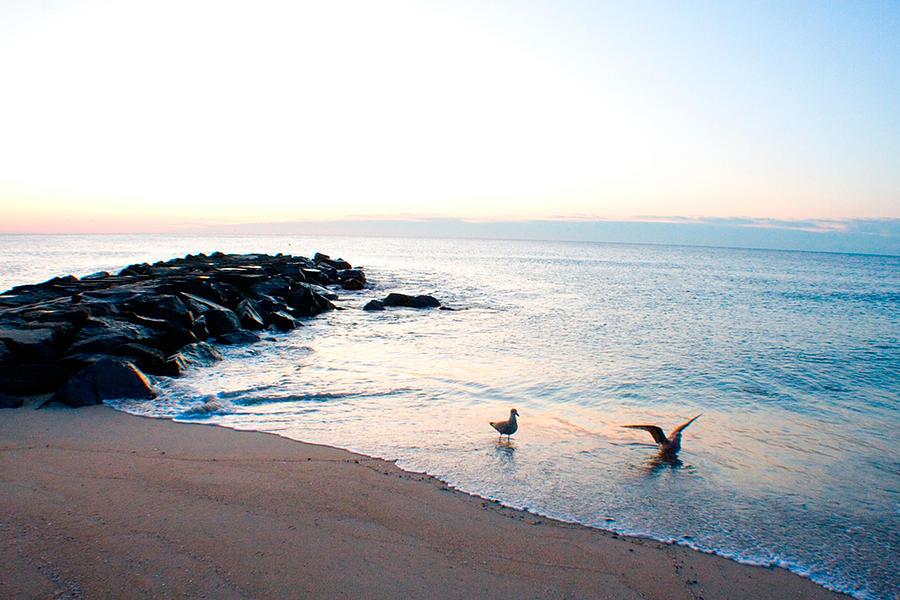 Beach Photograph - Asbury Seagulls by Jon Emery