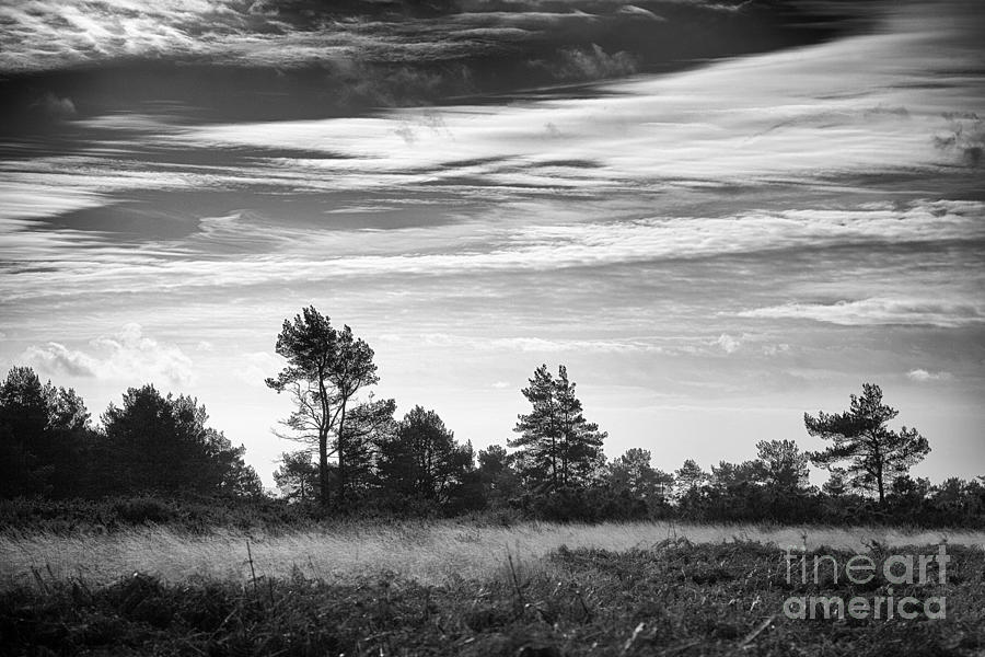 Ashdown Forest In Black And White Photograph