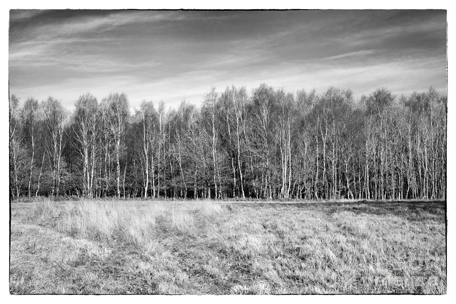 Ashdown Forest Photograph - Ashdown Forest Trees In A Row by Natalie Kinnear