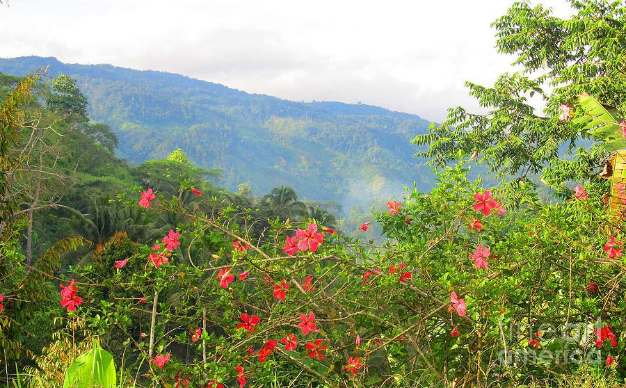 Asiatic Hibiscus Photograph