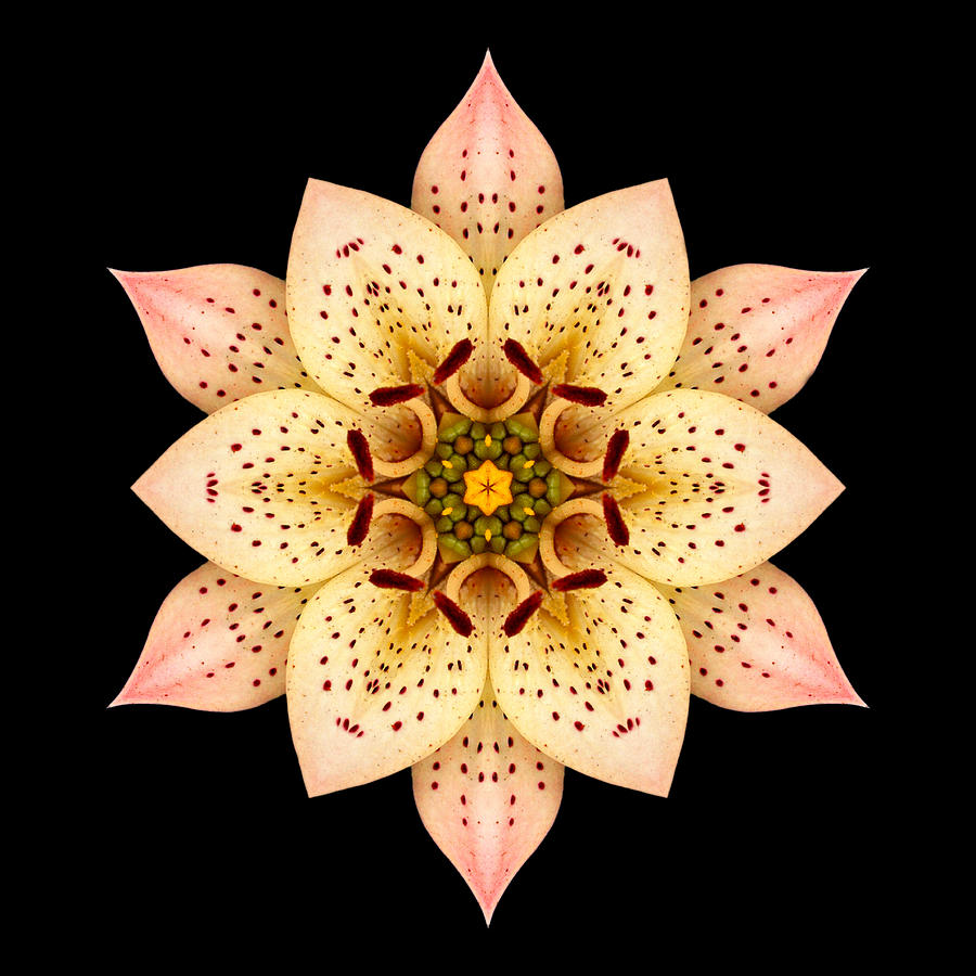 Flower Photograph - Asiatic Lily Flower Mandala by David J Bookbinder