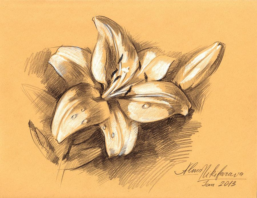 Image Gallery lilly sketch