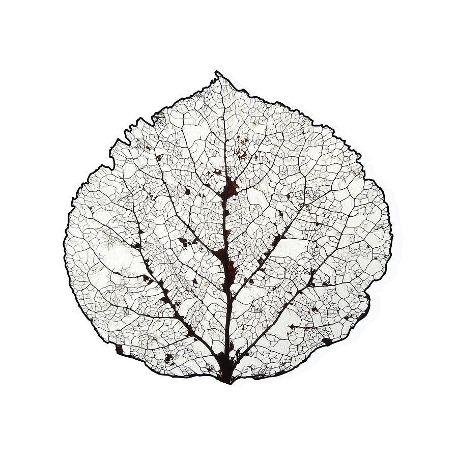 Leaf Skeleton Art Gallery