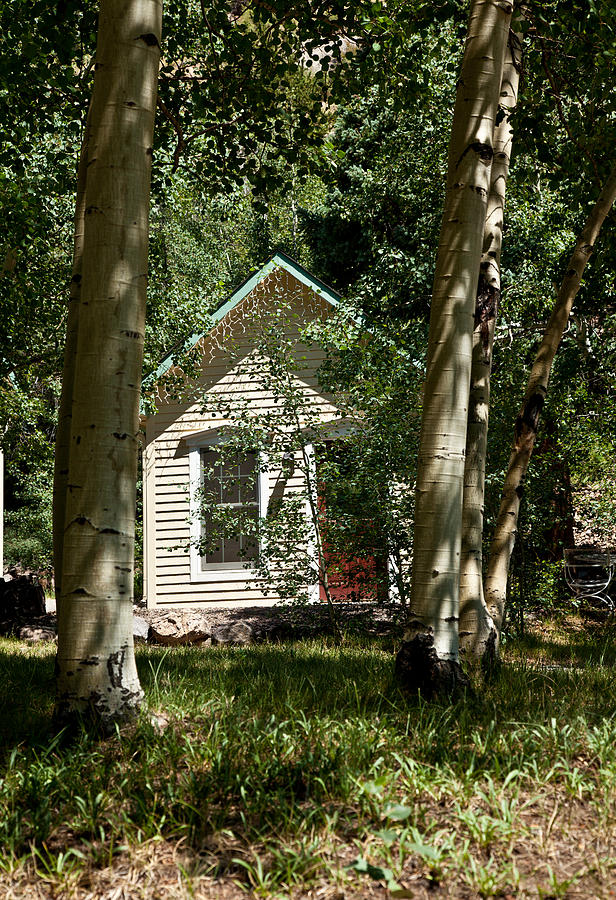 Aspens Surrounding A Small Cottage Photograph  - Aspens Surrounding A Small Cottage Fine Art Print