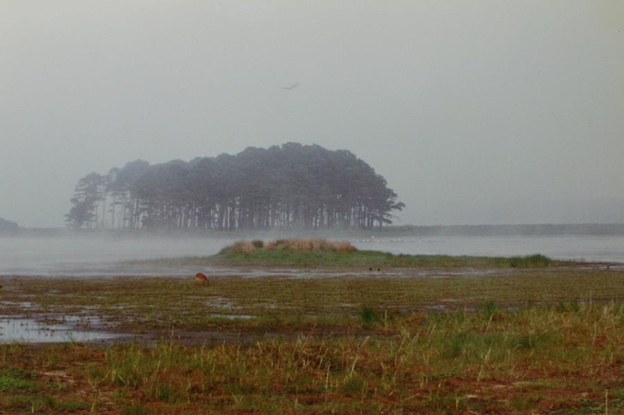 Assateague Fog Photograph