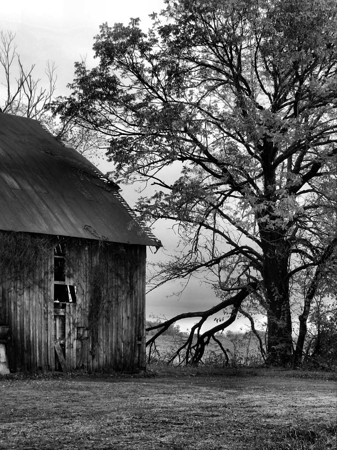 At The Barn In Bw Photograph