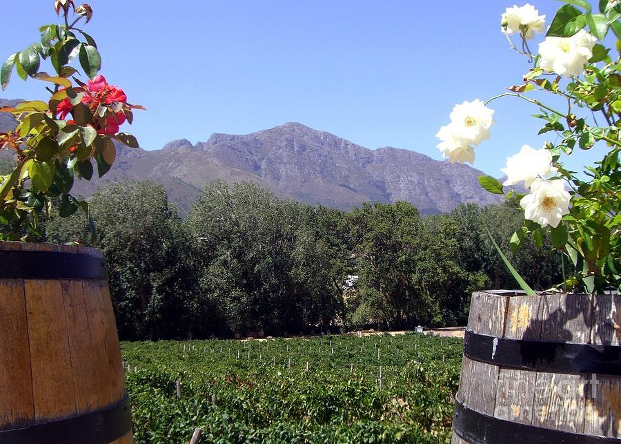 At The Rickety Bridge Winery Photograph